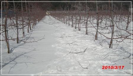 201003017snow